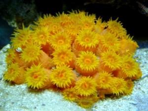 sun coral2