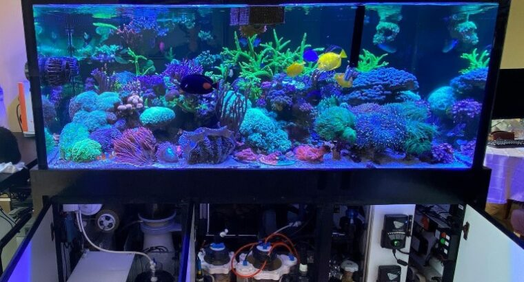 Starting your first marine tank. Overview to plan your equipment and budget (Part 1)