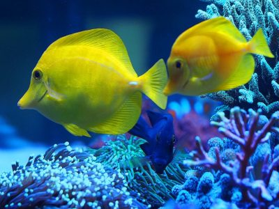 Starting your first marine tank. Overview to plan your equipment and budget (Part 2)