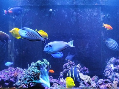 Bioload of an Aquarium: How much is too much?