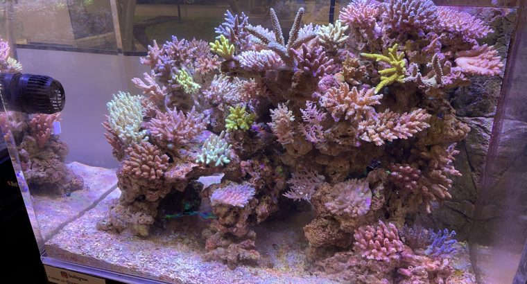 Are you ready to start a Marine Tank?