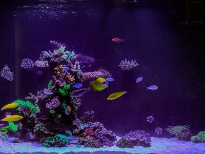 Driving the Reef Aquarium like a Car