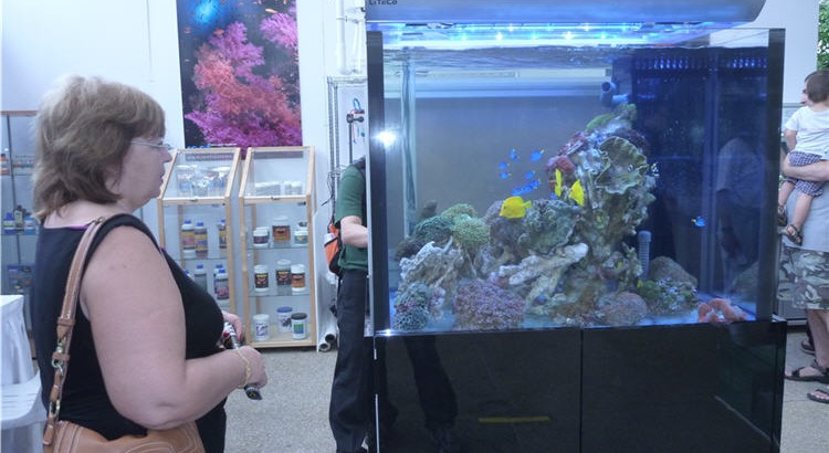 Water clarity in a reef tank