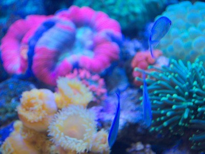 Nutrients on the Reef (I)
