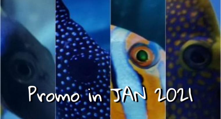 Promo in Jan 2021