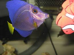 Fish diseases and how to Diagnosing a Sick Fish