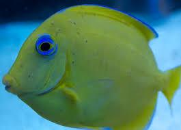 Black Ich (turbellarians) | REEF2REEF Saltwater and Reef Aquarium Forum