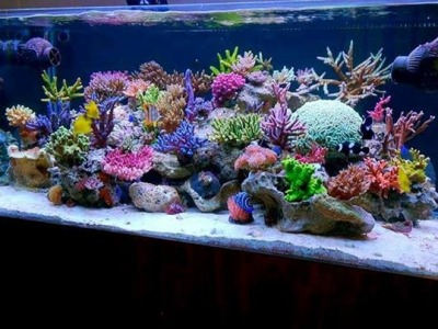 How to Set up a marine saltwater aquarium tank  ?